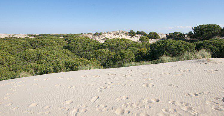 Dunas en Doñana. Habari1 (iStock)