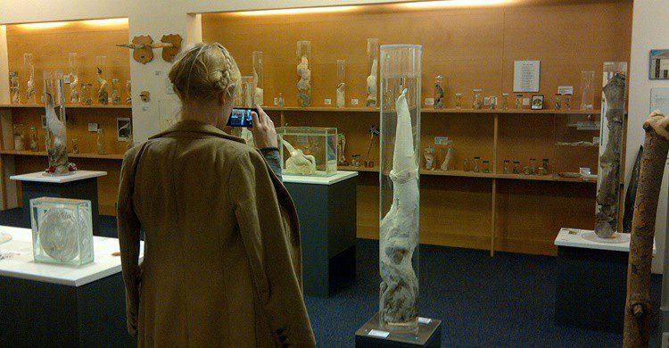 Turista en el museo (http://phallus.is/es/fotos.html)