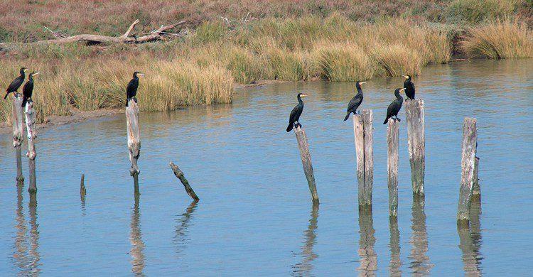 El Parque Natural de Doñana alberga más de 300 especies de aves (wikimedia.org)