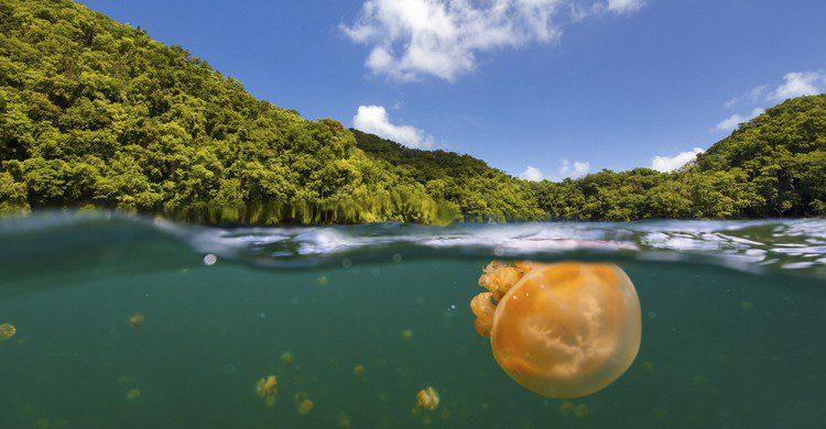 Medusa en el lago de Palaos (shalamov, iStock)