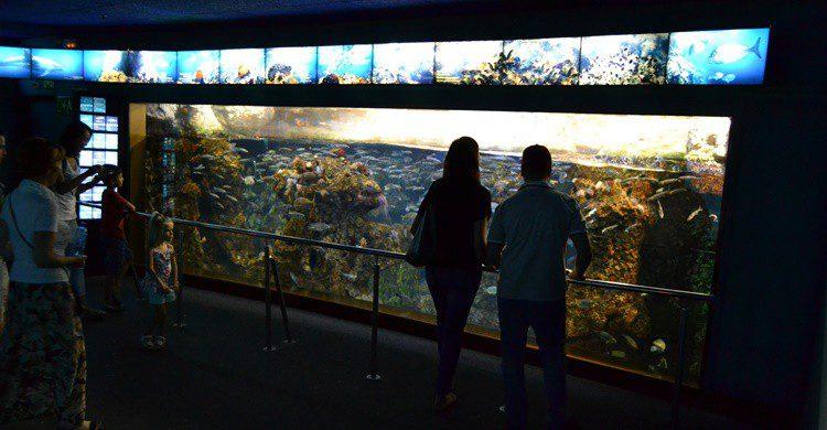 Aquarium de Barcelona. Emilio (Flickr)