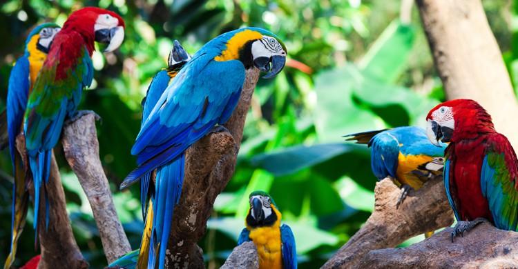 Los papagayos, protagonistas del Loro Parque (iStock)