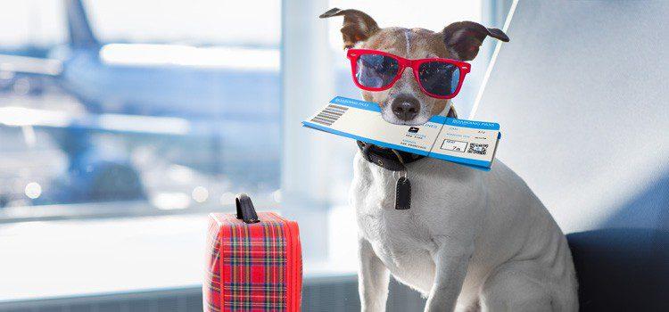 viajando en avion en verano