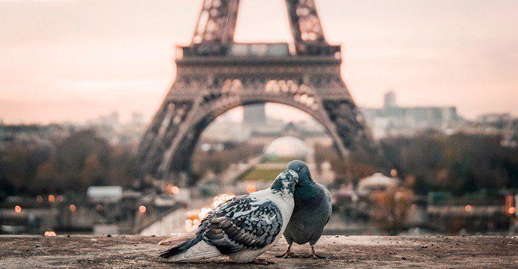 Dos aves delante de la Torre Eiffel