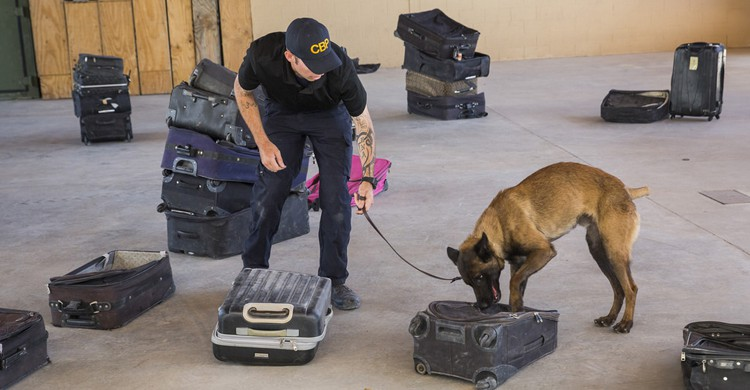 Entrenamiento canino en El Paso, Texas (US Customs and Border, Flickr)