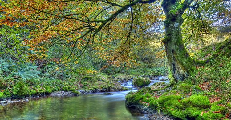 Paisaje del Bosque de Muniellos, Asturias