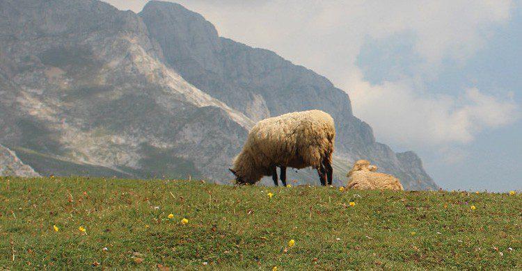 Pocos paisajes son más bellos que los cántabros (Fuente: Albert Torrelo / Flickr)