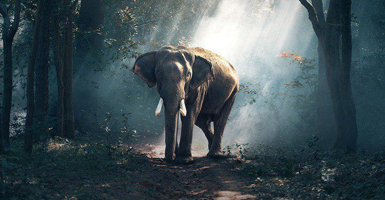 Un elefante en un bosque