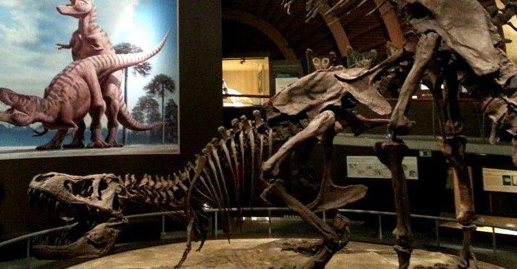 Detalle del Museo del Jurásico de Asturias (Fuente: Brianna Laugher / Flickr)