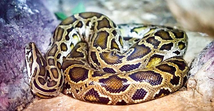 Serpiente (iStock)