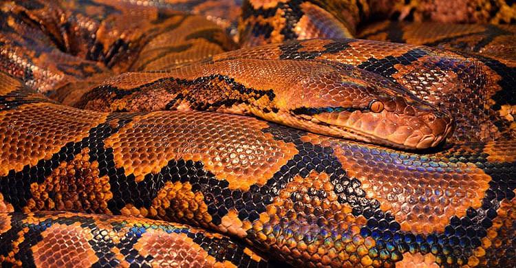 Serpiente (Pixabay)