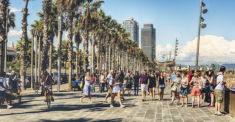 Conocer Barcelona en un Tour en bicicleta(IStock)